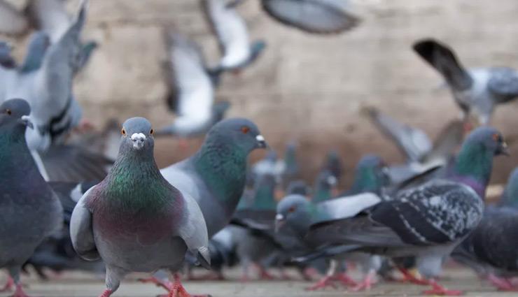 लॉकडाउन में कबूतरों को दाना खिलाना भारी पड़ा 2 युवकों को, पुलिस ने किया गिरफ्तार