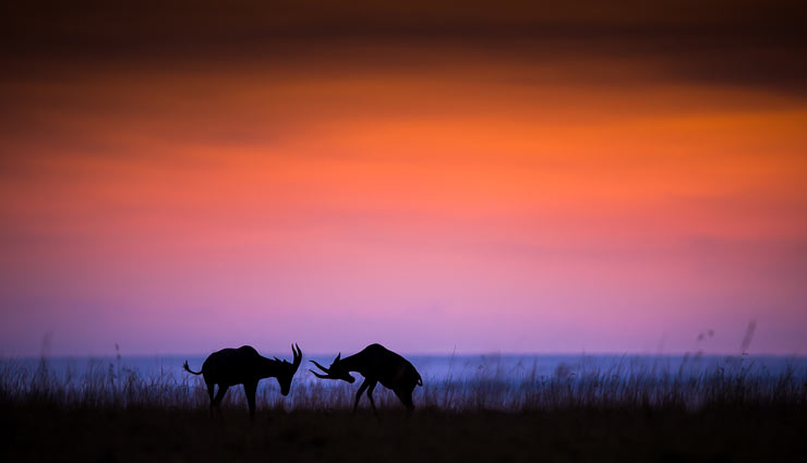 5 Places For Amazing Wildlife Photography in The World