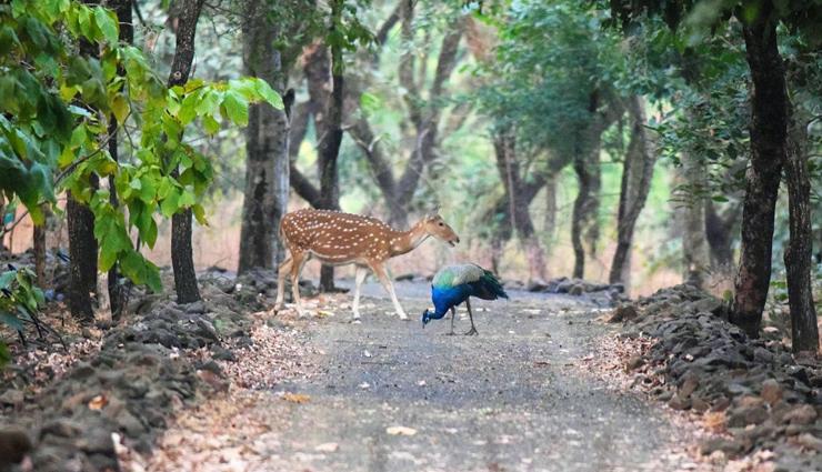 dumna nature reserve,rani durgavati museum,balancing rock,madan mahal fort,sangram sagar lake,places in jabalpur,jabalpur,madhya pradesh,madhya pradesh tourism