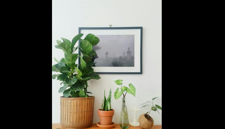 plants friendly,decorating home with plants,plants,indoor plants