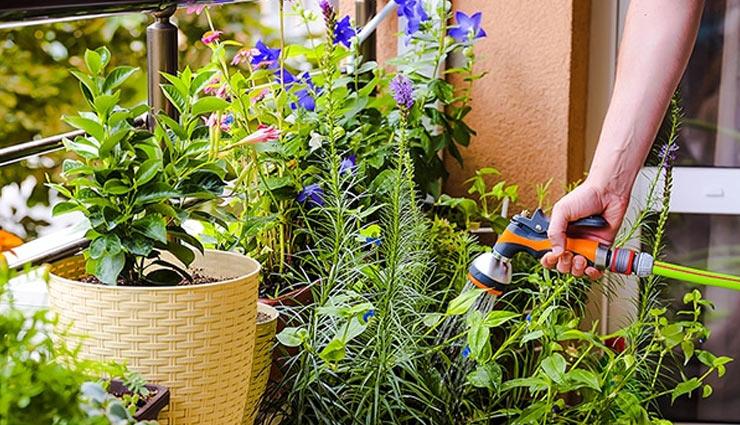 balcony decor,home decor tips,home decor,plants for balcony,balcony plants,tips to plant plants in balcony,household tips ,बालकनी के लिए पौधे, होम डेकोर, हाउसहोल्ड टिप्स, बालकनी को सजाये इन पौधों से