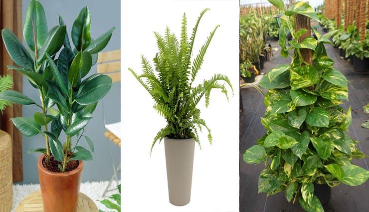 summers tips,home coolness tips,natural tips to cool house,cool house by plants ,गर्मियों के टिप्स, घर में ठंडक के टिप्स, पौधों से घर में ठंडक, पौधों से घर में ठंडक