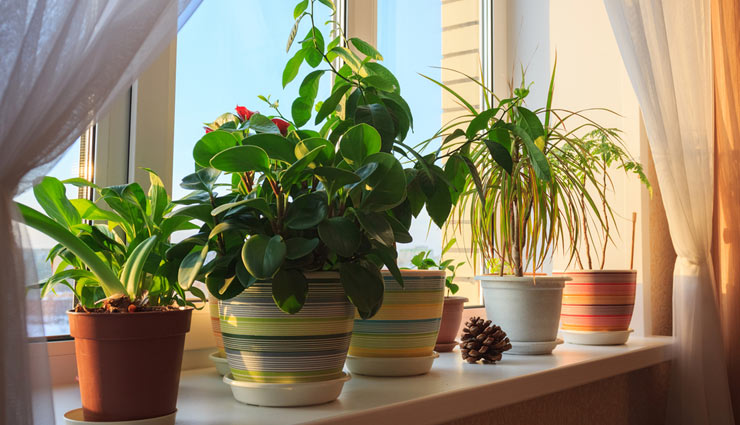 5 Ways To Make Your Home Plants Friendly
