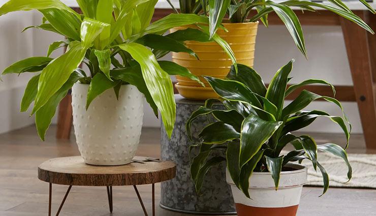 designer pots,pots for plants,plants decoration tips,household tips