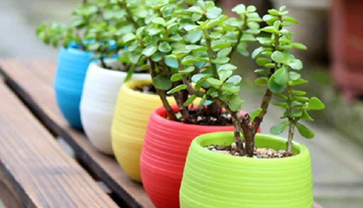 5 Pots To Bring Home For Your Plants