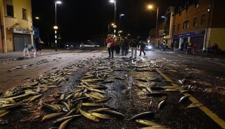 weird news,weird incident,weird rain,fish rain,fishes on road,honduras ,अनोखी खबर, अनोखा मामला, अनोखी बरसात, मछलियों की बरसात, होंडूरास