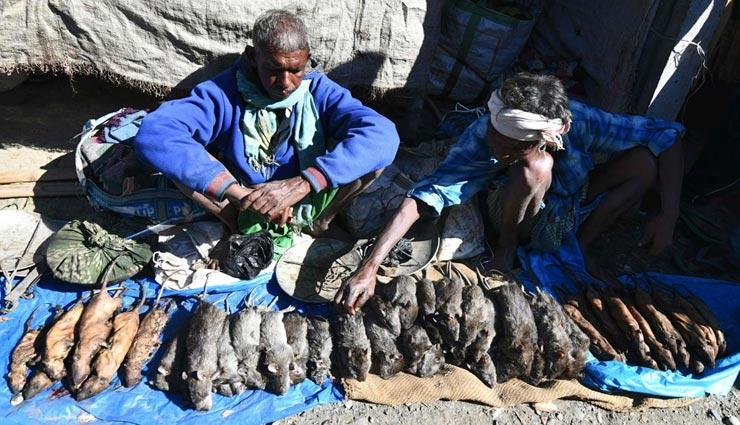 आखिर क्यों यहां चिकन से महंगा बिक रहा है चूहे का मांस, कारण जान रह जाएंगे हैरान