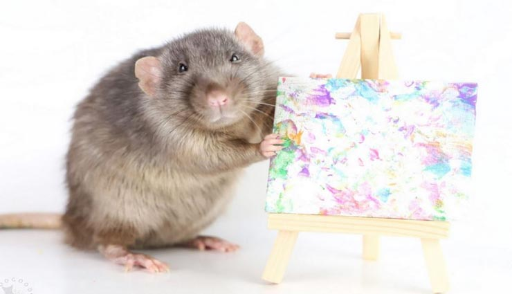 weird news,weird information,weird mouse,mouse as painter ,अनोखी खबर, अनोखी जानकारी, अनोखा चूहा, कलाकार चूहा, पेंटर चूहा