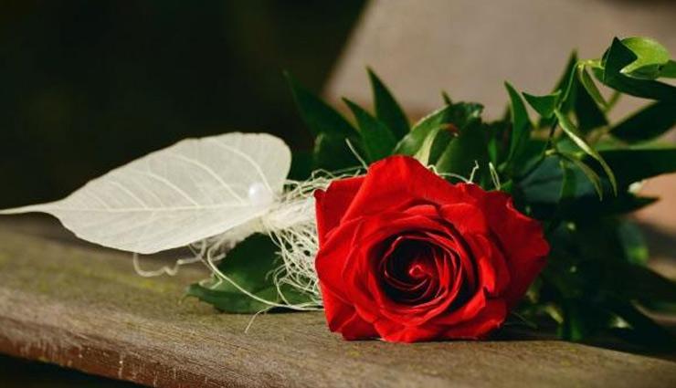 Valentine Week Special: रोज डे पर इन शायरी से करें पार्टनर को इम्प्रेस, हवा में घुलने लगेगी प्यार कि खुशबू