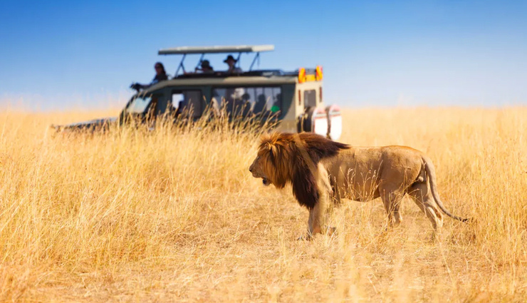 6 Safari Destinations in Australia You Must Visit Once in a Lifetime