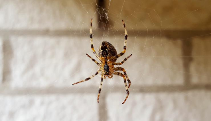 get rid of spiders from home,household tips,home decor tips,remove spiders from home