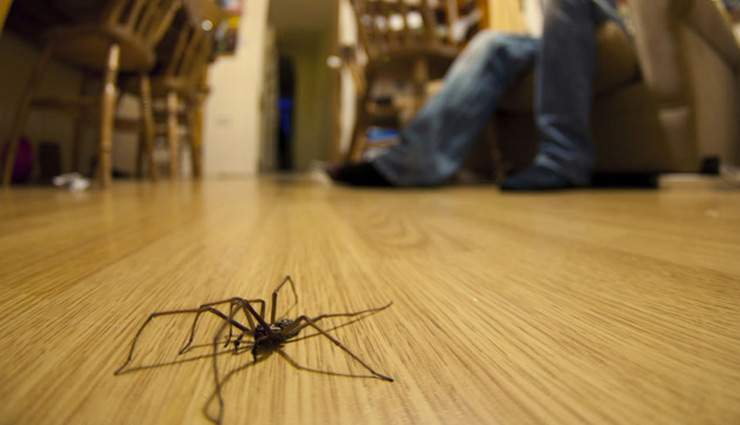 spiders,tips to get rid of spiders,household tips