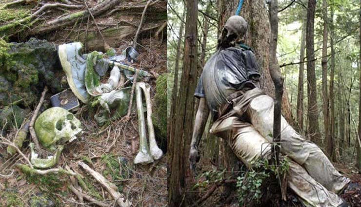 aokigahara forest,japan,suicide forest,khabren zara hatke,hatke kahabar,off beat news,weird news,omg,weird news,weird world,off beat stories ,अजब गजब खबरे हिंदी में