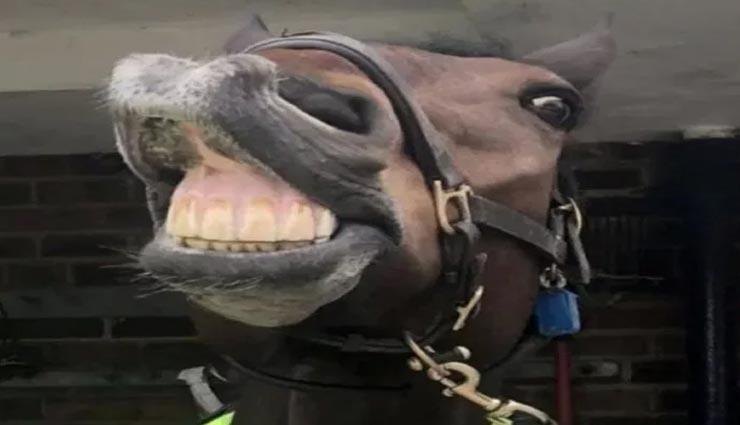 weird news,weird horse,uk police horse,tea lover horse ,अनोखी खबर, अनोखा मामला, अनोखा घोड़ा, घोड़े को चाय की लत