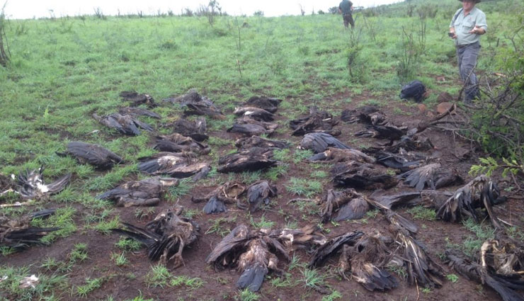 indian wildlife,threats to indian wildlife,wildlife care tips