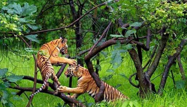 tiger reserves,maharashtra,tadoba- andhari tiger reserve,pench tiger reserve,koyna wildlife sanctuary,bor wildlife sanctuary,nagzira wildlife sanctuary