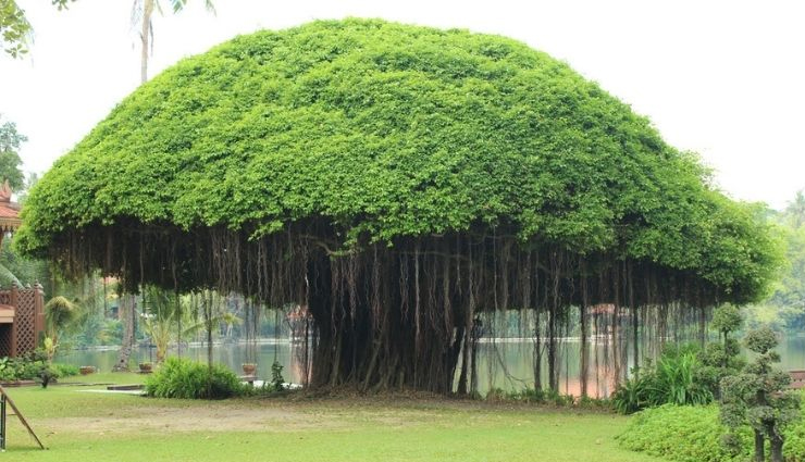 Special Health Importance of Different Trees in Our Lives