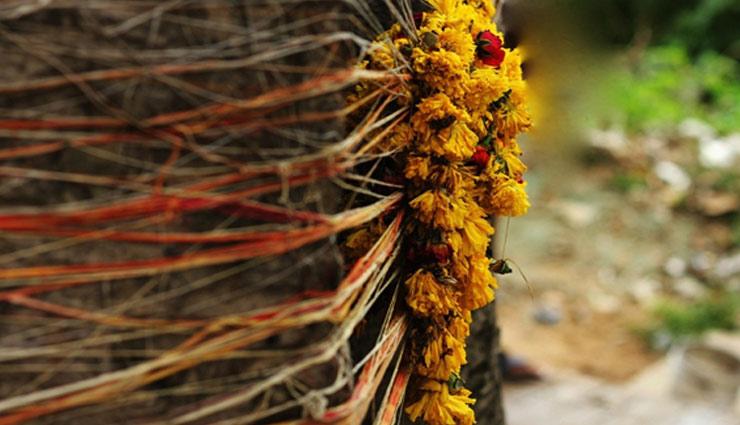 इन पेड़-पौधों की पूजा भी दिला सकती है धन-ऐश्वर्य, जानें कैसे