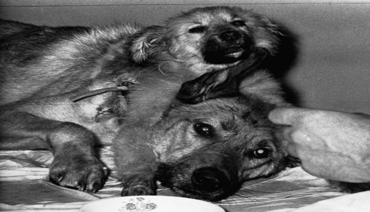 वैज्ञानिक का खतरनाक प्रयोग, बना ड़ाला दो सर वाला कुत्ता