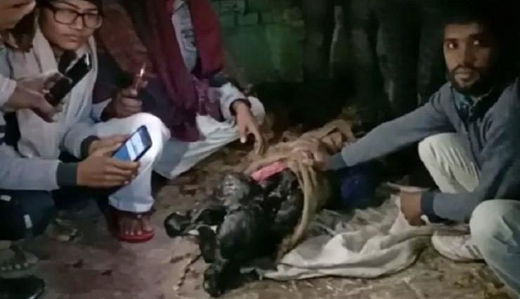 haryana news,sonipat news,omg,bufallo,weird news in hindi ,अजब गजब खबरे हिंदी में