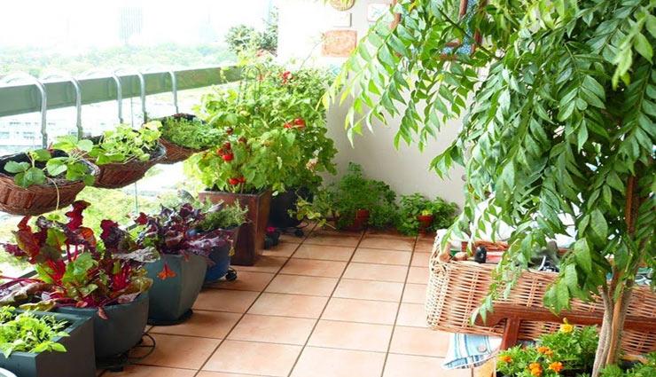 बालकनी को सजाएं इन पौधों से, दे अपने घर  को नया लुक
