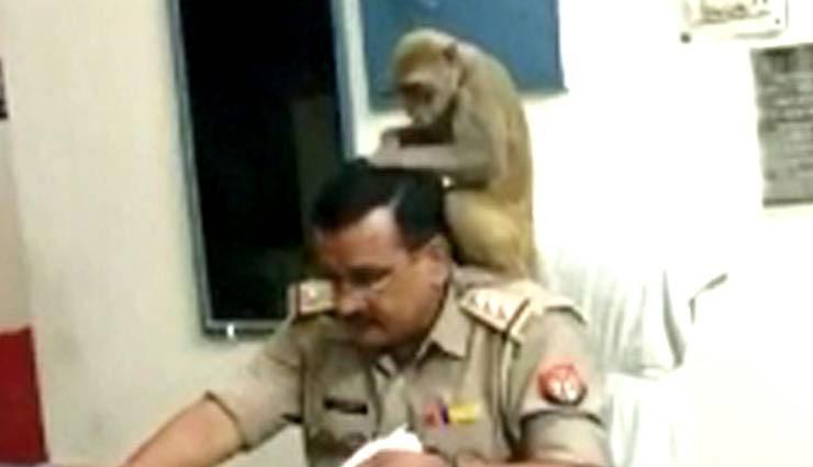 viral photos,monkey,sho,hair,lice,pilibhit,uttar pradesh,weird news in hindi ,वायरल तस्वीरें, बंदर, एसएचओ, बाल, जूं, पीलीभीत, उत्तर प्रदेश