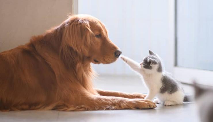 5 Vastu Tips To Adopt For Pets Lifeberrys Com À¤¹ À¤¦
