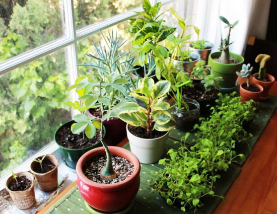 Know The Right Direction To Keep Plants In House For Growth And Prosperity