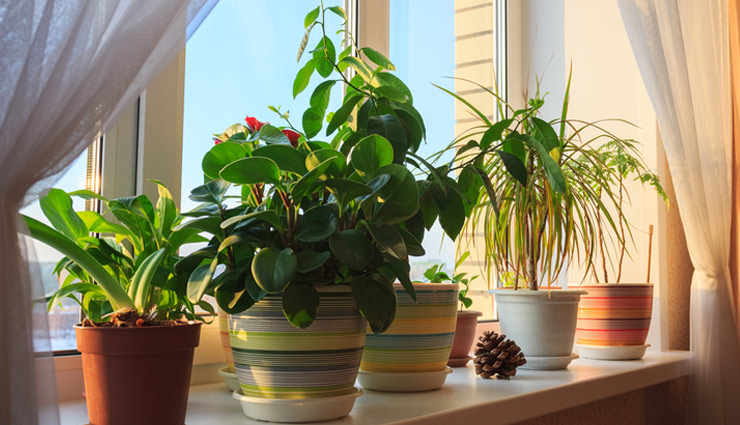 6 Vatu Tips For Plants in House