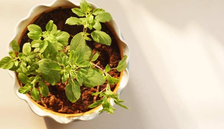 vastu tips,vastu plants,plants for money,plants for happiness,indoor plants,astrology tips