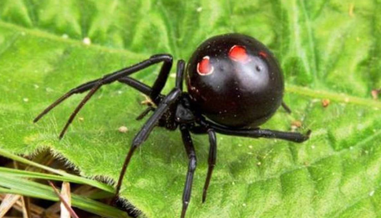 5 Most Venomous Insects Found in The World