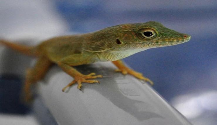 5 Ways To Get Rid of Lizards From Home