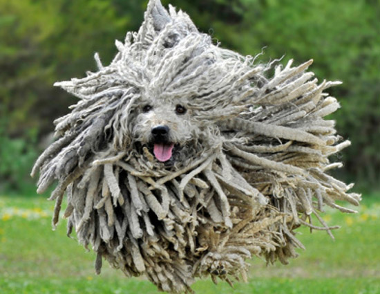 5 Most Weird Dog Breeds in The World