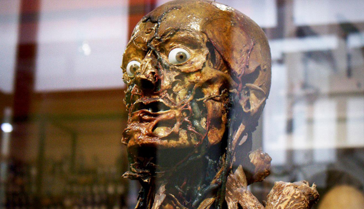 6 Weird Museum Around The World That are Worth Your Visit