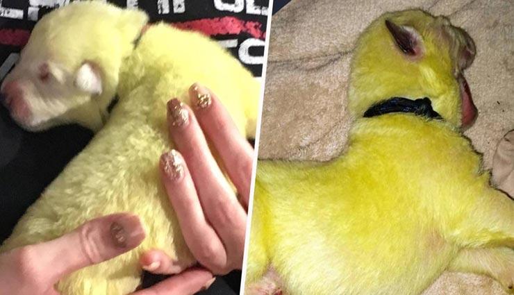 weird news,weird incident,green puppy,pics viral on social media ,अनोखी खबर, अनोखा मामला, हरे रंग का कुत्ते का बच्चा, सोशल मीडिया पर वायरल तस्वीरें
