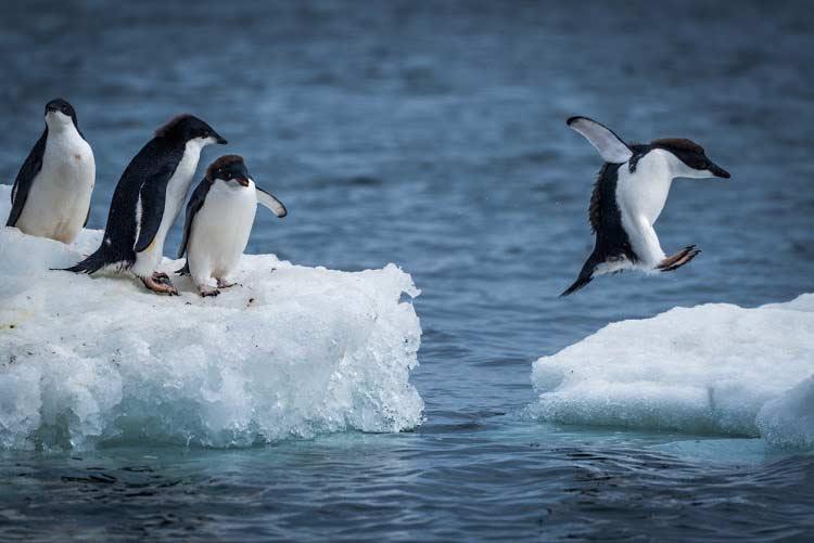 weird rules,weird rules of antarctica,antarctica,traveling tips