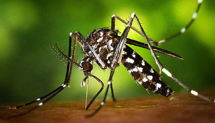Zika Virus: मच्छर के काटने से होने वाली इस खतरनाक बीमारी का नहीं है कोई इलाज, जानें लक्षण और रोकथाम के उपाय