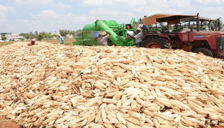 maize,fall fall,farmers,andhra ,மக்காச்சோளம், விலை வீழ்ச்சி, விவசாயிகள், ஆந்திரா