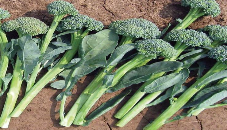 cholesterol,broccoli,health,vitamins,nutrients ,கொலஸ்ட்ரால்,ப்ரோக்கோலினி,ஆரோக்கியம்,வைட்டமின்,சத்துக்கள்