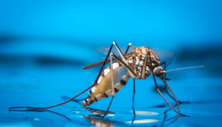 tirupur,dengue fever,rain,mosquitoes,treatment ,திருப்பூர்,டெங்கு காய்ச்சல்,மழை,கொசுக்கள்,சிகிச்சை
