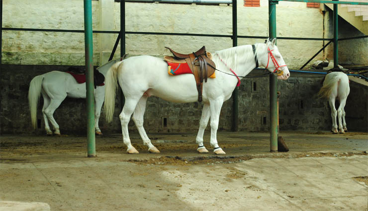 ooty,horseback riding,travel,permission,workers ,ஊட்டி,குதிரைசவாரி,சுற்றுலா,அனுமதி,தொழிலாளர்கள்