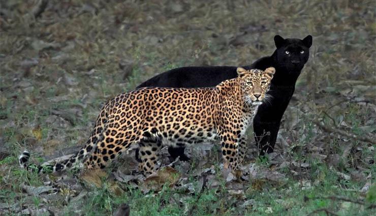 scenery,kabini,wilderness,lake,tourism ,இயற்கை எழில்,கபினி,வனப்பகுதி,ஏரி,சுற்றுலா