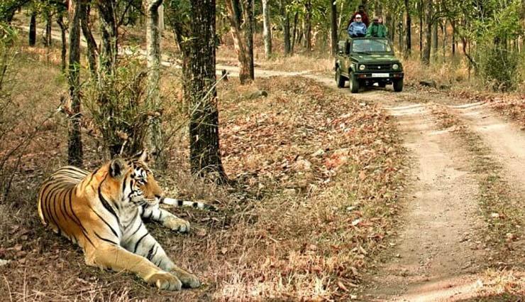 mudumalai,tiger reserve,wildlife,survey work,forest department ,முதுமலை,புலிகள் காப்பகம்,வனவிலங்குகள்,கணக்கெடுப்பு பணி,வனத்துறை
