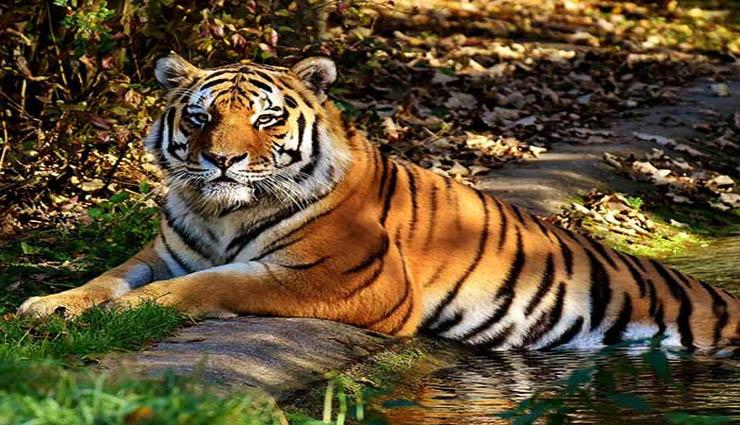 mudumalai,dense forest,flora,fauna,tourism ,முதுமலை,அடர்ந்த காடு,தாவரங்கள்,விலங்குகள்,சுற்றுலா