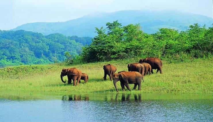 mudumalai,tigers,curfew,tourism,permission ,முதுமலை,புலிகள்,ஊரடங்கு,சுற்றுலா,அனுமதி